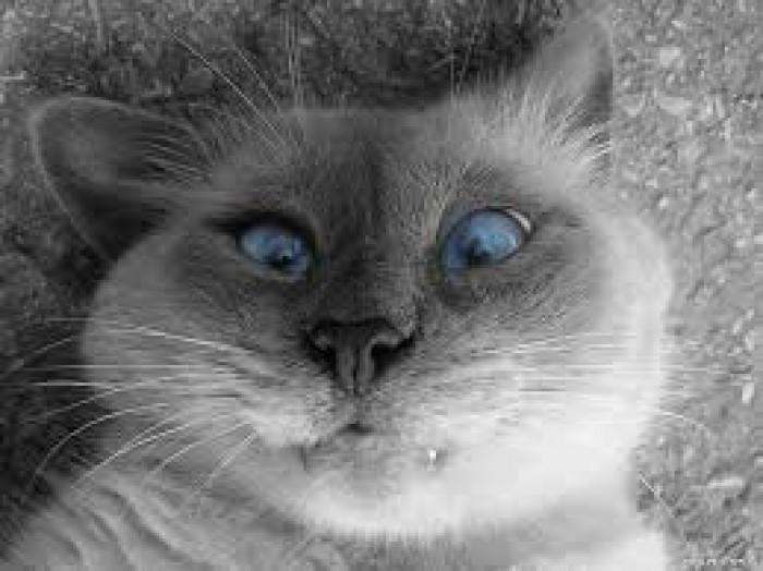 Вицове: Коте