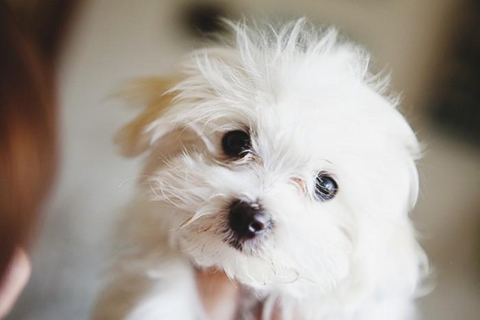 Вицове: Сладко куче