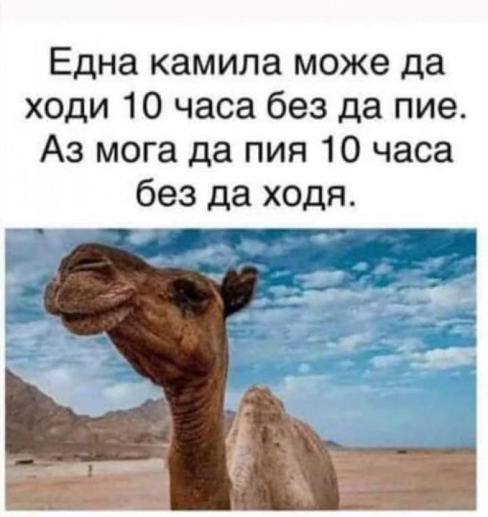 Вицове: Една камила